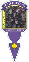 Basil Purple Ruffles