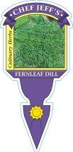 Dill Fernleaf