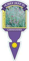 Germander