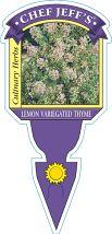 Thyme Lemon Varigated