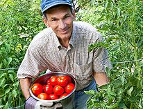 tomato-tips206x158_02