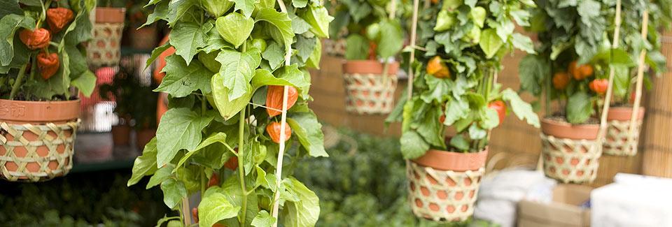 container-garden_background2