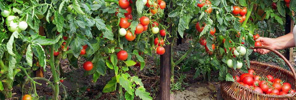 healthy-veg-gard_background2