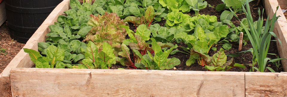 raised-beds_background2